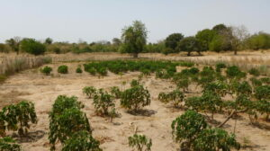 Online climate tool to support West African agricultural planning goes live