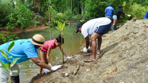Ecosystem-based adaptation project reduces flood risk in Seychelles