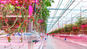 Horticultural lighting is a healthy ingredient for sustainable food production