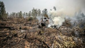 Forest destruction spiked in Indonesia during coronavirus lockdown