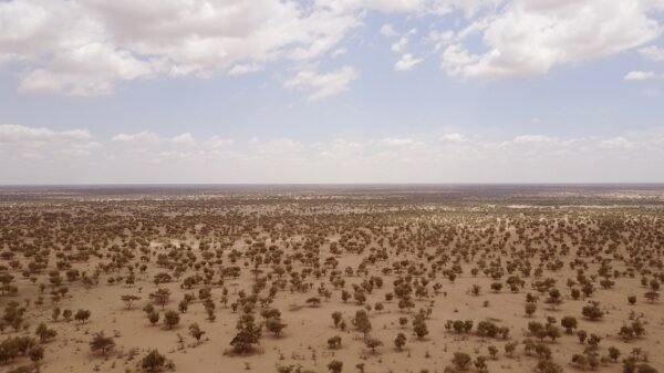 African ministers call for investment in Great Green Wall to aid Covid-19 recovery