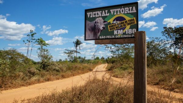 Encouraged by Bolsonaro, land grabbers advance on Amazon indigenous territory