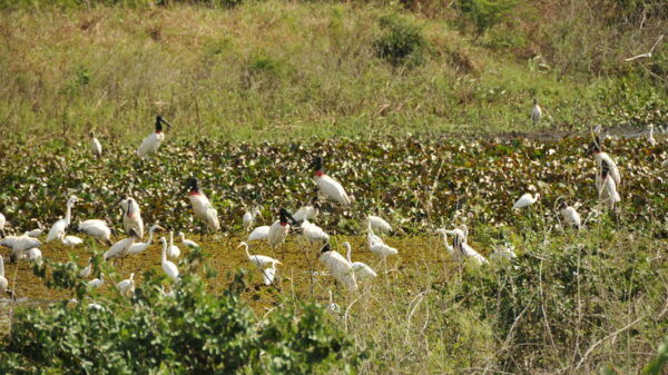Bolsonaro shifts blame for unprecedented Brazilian wetland fires