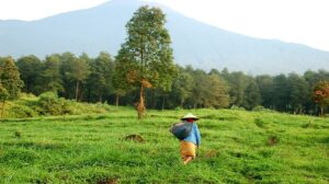 In Java, a Japanese-financed coal plant threatens our health and livelihoods