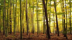 More than carbon: securing clean water by protecting forests