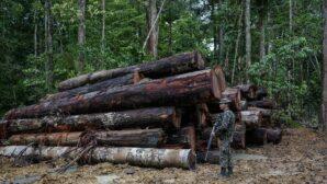 Brazil must reverse deforestation trends before EU finalises Mercosur trade deal