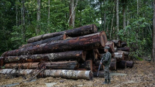 Brazil must reverse deforestation trends before EU finalises Mercosur trade deal