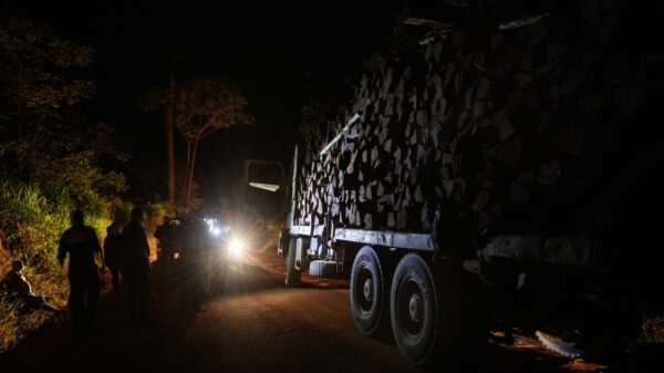 The net tightens around illegal logging operations in Pará, Bolsonaro's stronghold