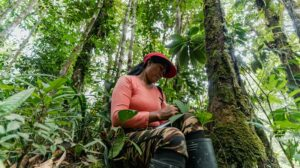 Colombia banks on forest economy to deliver climate ambition leap