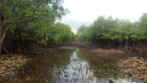 Bla bla bla for biodiversity - Climate Weekly
