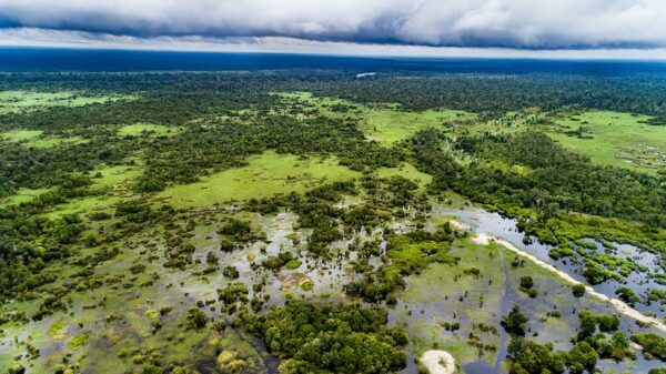 Carney's carbon offset taskforce ducks environmental integrity questions