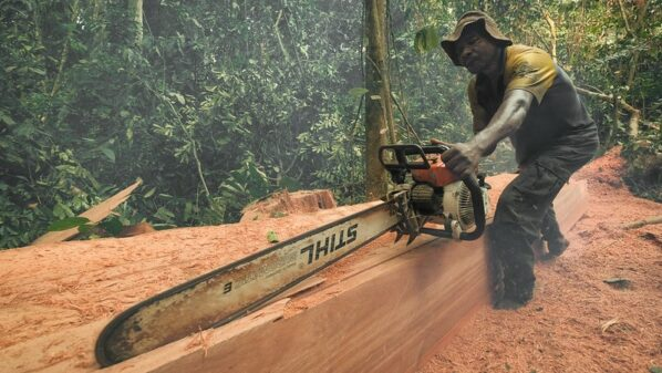 DR Congo campaigners take minister to court over illegal logging rights claims