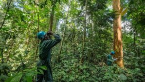 Cleaning up the Congo - Climate Weekly