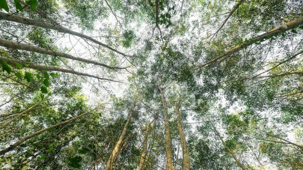 US, UK and Norway launch $1bn initiative to protect tropical forests