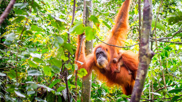 Germany launches $1 billion biodiversity fund after world misses targets