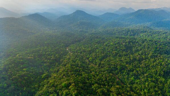 Norway pays Gabon $17m for forest protection despite deforestation spike