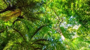 'Hot air' carbon offset scheme undermines Colombia's climate goal, experts warn