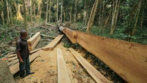 DR Congo plans to lift logging moratorium amid forest protection talks