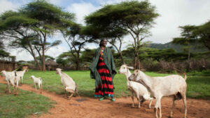 What does pastoralism have to do with climate change?