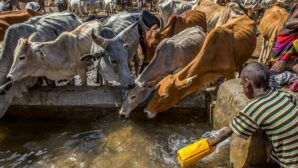 Ethiopia to shift from beef to chicken production under updated climate plan