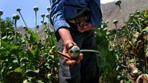 Who speaks for Afghans? - Climate Weekly