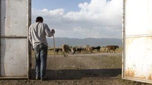 GCF considers renewed partnership with UNDP, amid corruption investigations