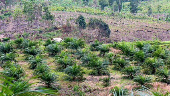 Countries failing to protect forests, 7 years after New York declaration