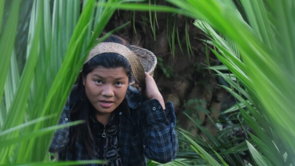 Modi's 'gamechanger' palm oil push raises concerns for Indian forests and women